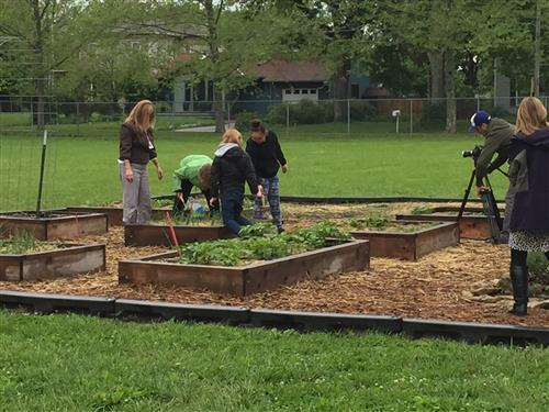 Students weed the garden while a tv crew looks on.